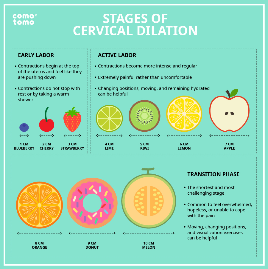 cervical dilation